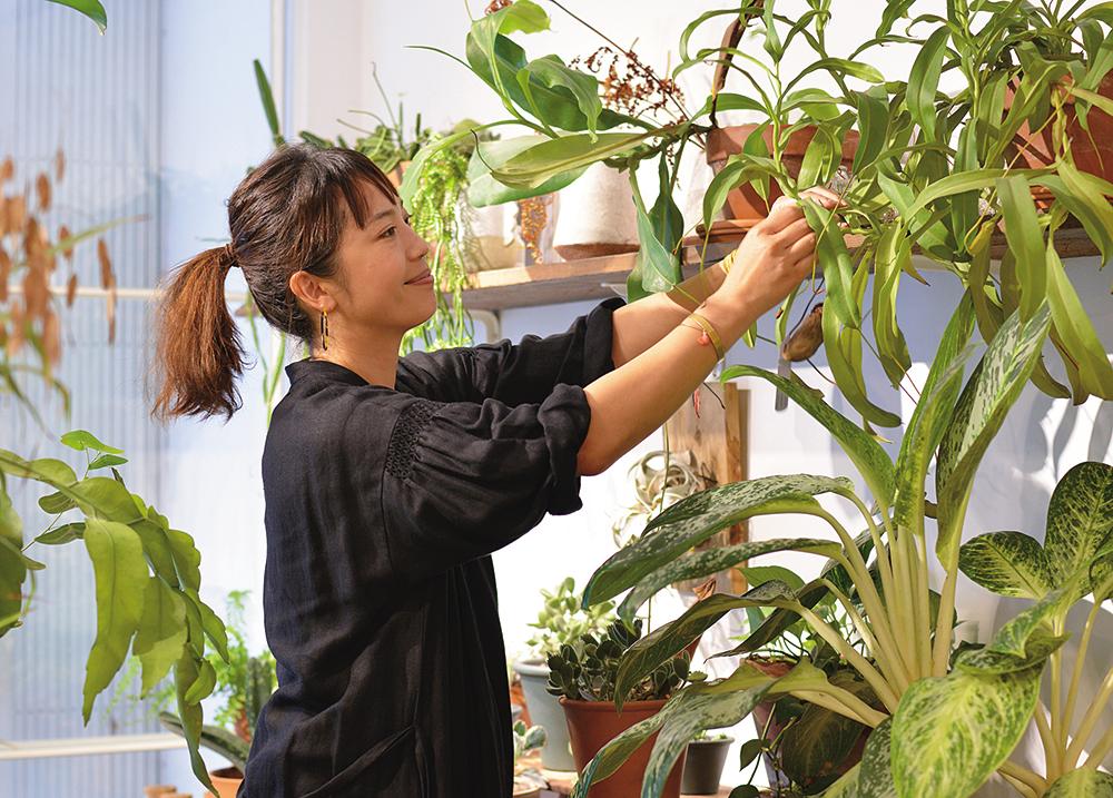 嶺貴子,Nettle Plants