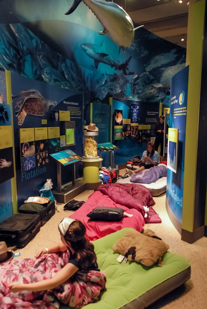 Museum of Natural History/華盛頓/美國/旅遊/博物館