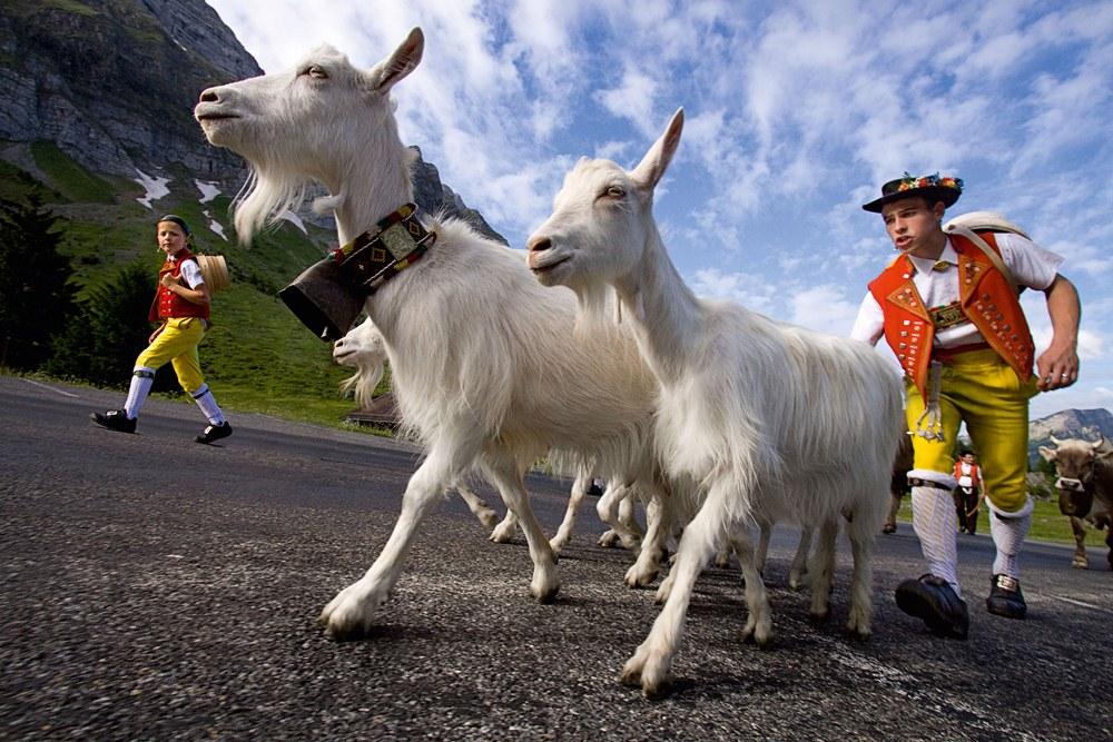 開車奔馳阿爾卑斯山