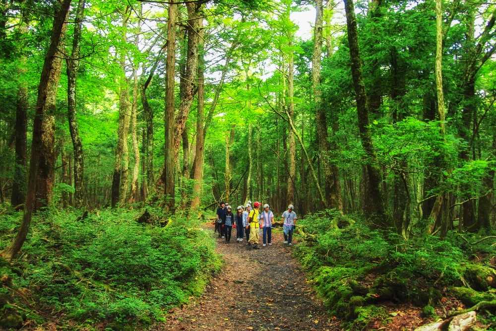 Outback Adventure Tours 青木原樹海/富士山/日本/旅遊/自然景觀