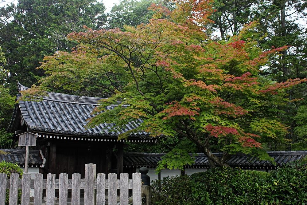 西芳寺/京都/日本/世界文化遺產