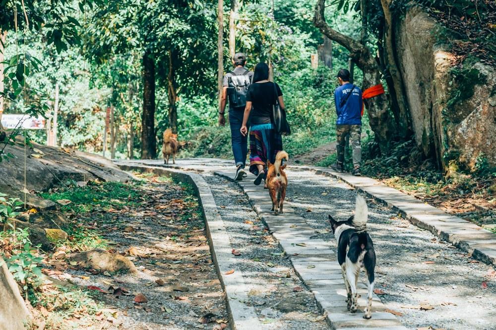 Mae Kampong Eco Village/泰國/湄堪彭生態村