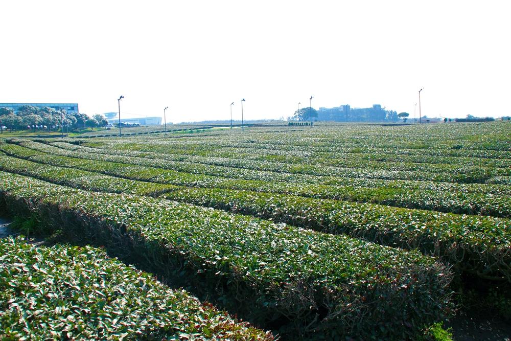 奧雪綠茶博物館/濟州島