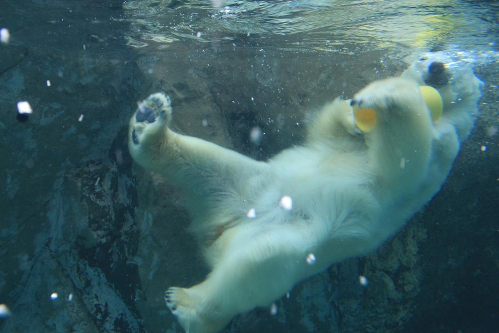 動物園/北海道/日本/深度旅遊