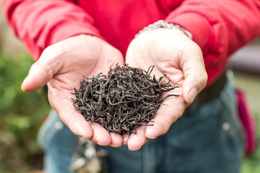 森林紅茶/南投