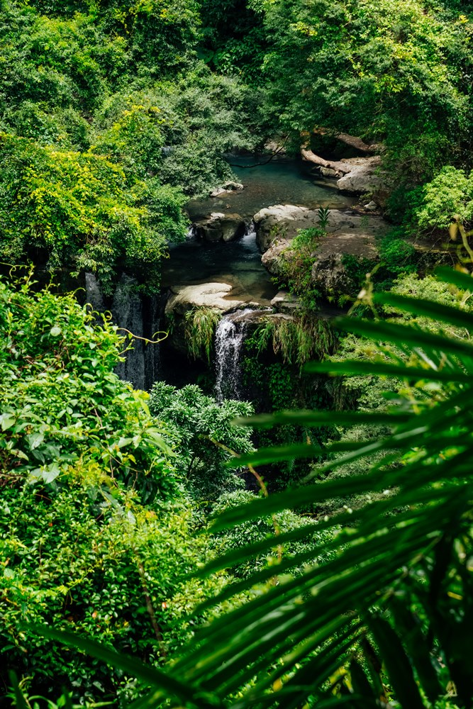 神祕瀑布事實上可以從對岸的森林呼吸步道隱隱望見