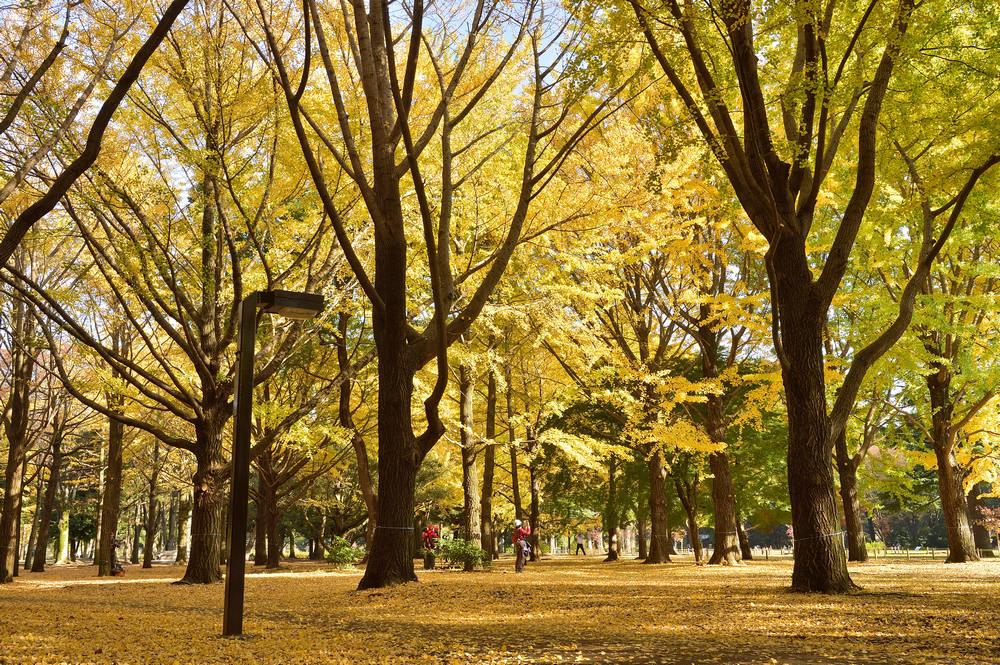 Yoyogi Park 代代木公園/東京/日本