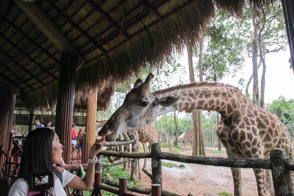 越南/富國島/Vinpearl Safari