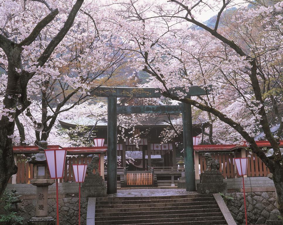 日本/福井縣/越山若水/自然/旅行/金崎宮/祈良緣