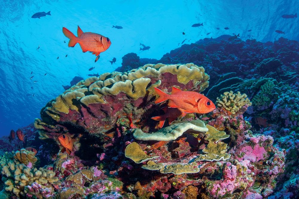 珊瑚礁/PANTONE/大海