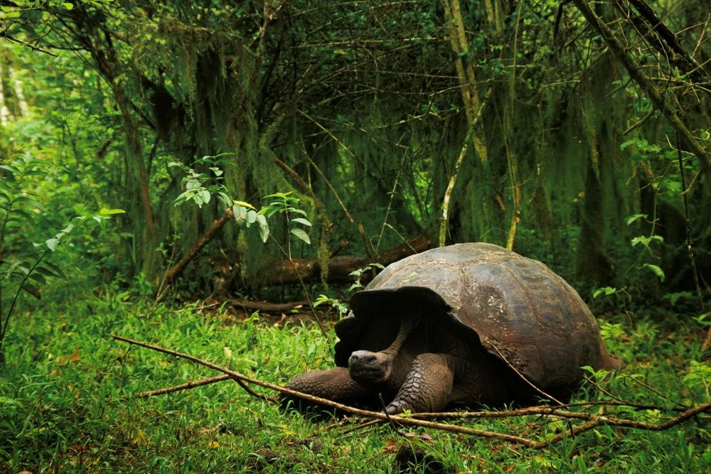 陸龜/馬賽Kyo/旅遊攝影者/加拉巴哥