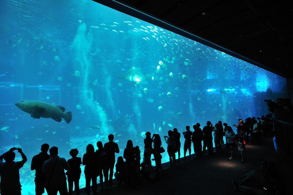 S.E.A.海洋館/新加坡