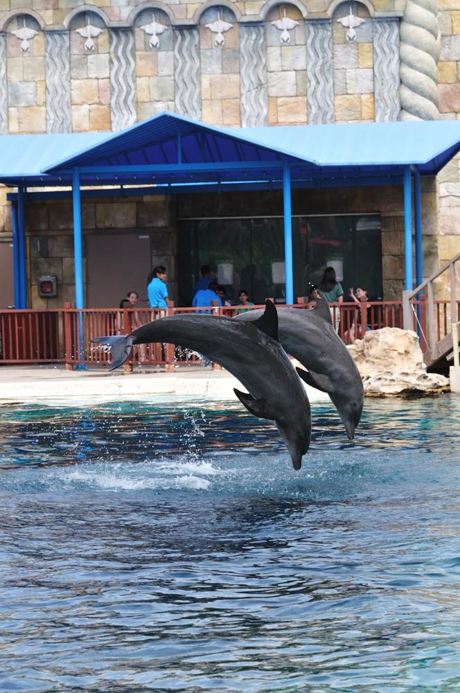 海豚園/海豚表演/新加坡