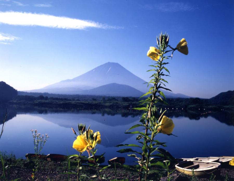 日本/富士五湖廣域/精進湖