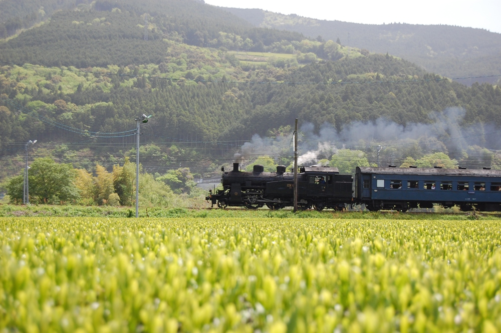 大井川鐵道SL蒸氣機關車/日本