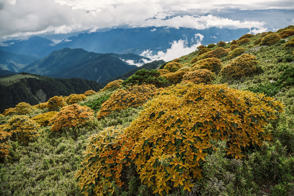 南湖大山花朵/中央山脈/台灣
