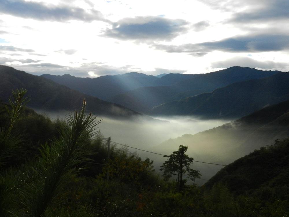 雲海景觀/樂哈山露營區/露營/貓毛