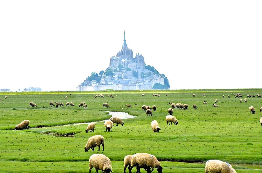 法國城堡/露營/環法/法國