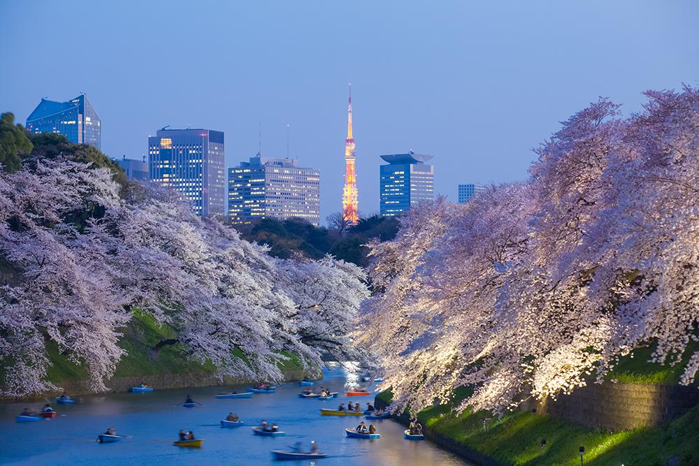 東京/日本
