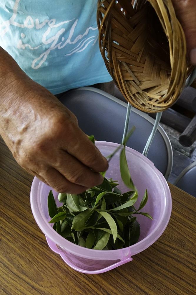 茶葉/台灣茶文化/宜蘭/台灣