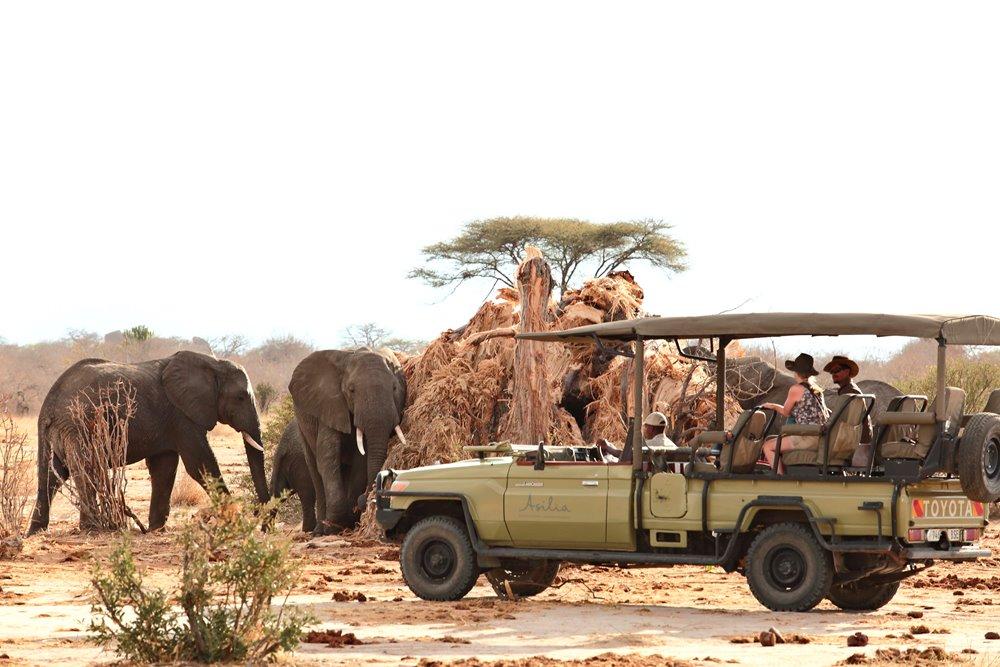 Jabali Ridge/獅子王/坦尚尼亞/東非/非洲