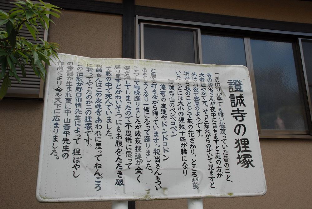 狸貓/證誠寺/木更津/千葉縣/日本