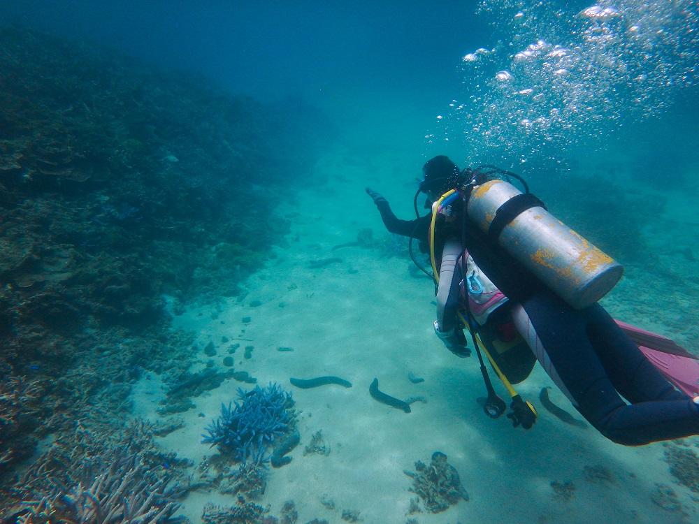 島澳七七/澎湖旅遊/深度旅遊/潛水/瑚礁景觀