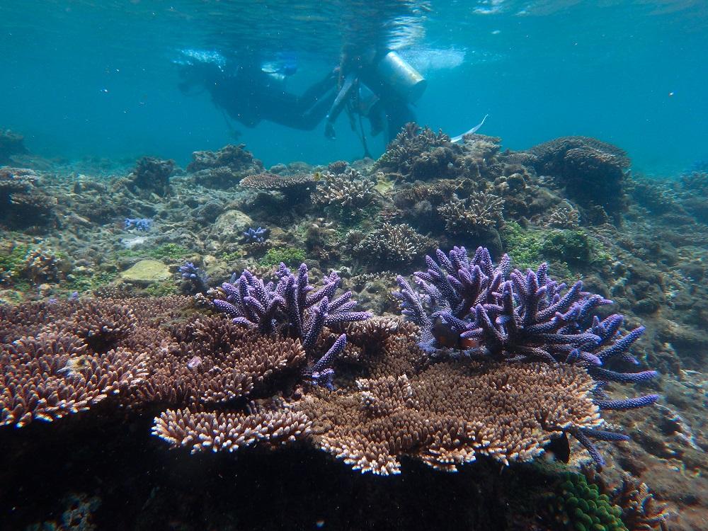 島澳七七/澎湖旅遊/深度旅遊/潛水課程/瑚礁景觀