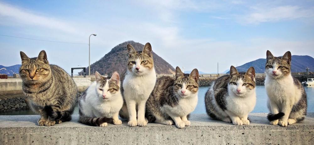 貓咪/2019大人的美好學堂/手機拍貓貓/菜菜子Erica Wu/動物攝影