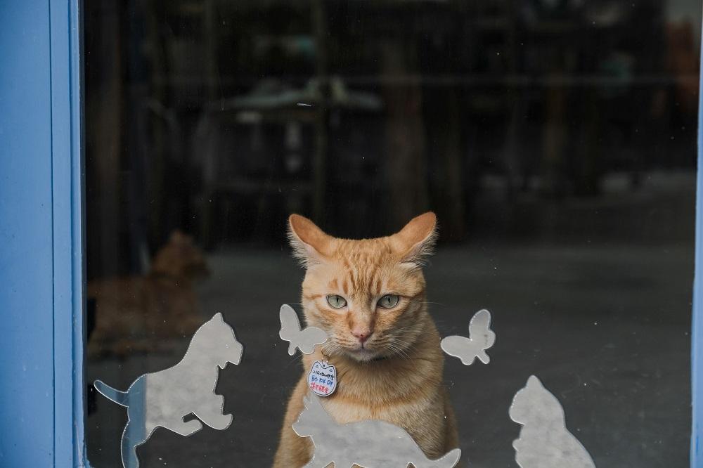 橘貓/貓咪攝影/動物攝影/王宇軒