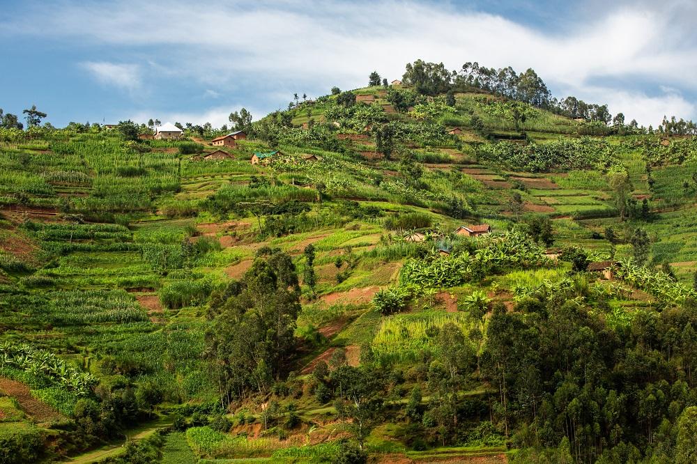 Singita/非洲/盧安達/荒野保護區/森林/火山景觀/原始自然