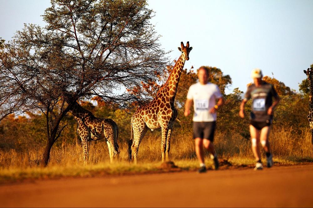 南非Big Five馬拉松/長頸鹿/動物大遷徙/富比士雜誌/十大最值得跑旅的賽事