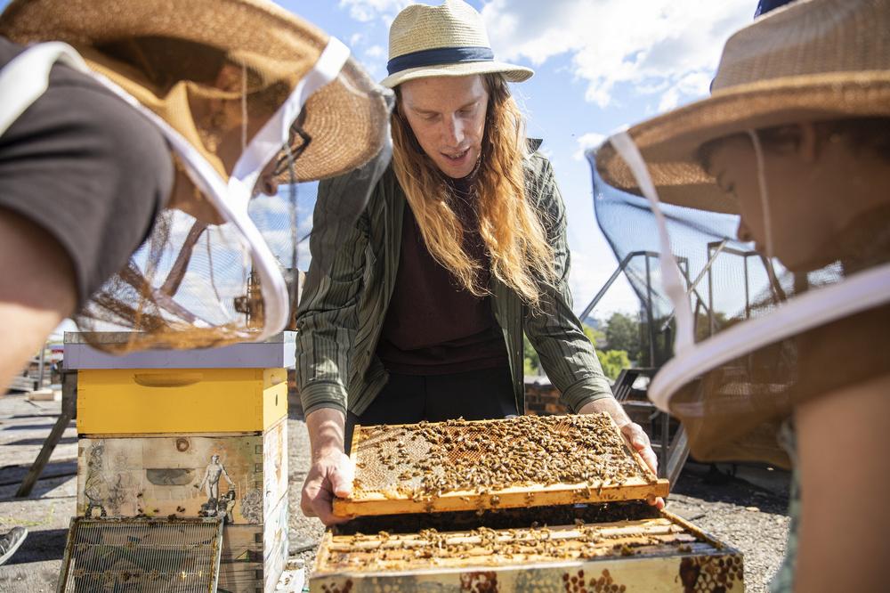 漢密爾頓市/加拿大/城市養蜂人/airbnb experiences