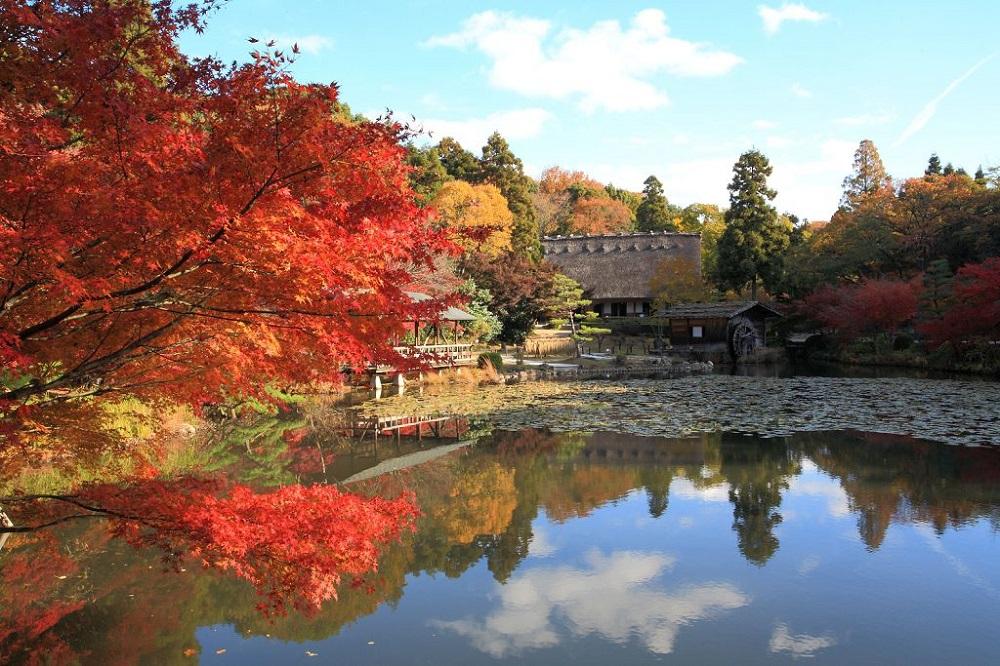 東山動植物園/日本/名古屋/楓葉/楓紅/湖景/合掌屋