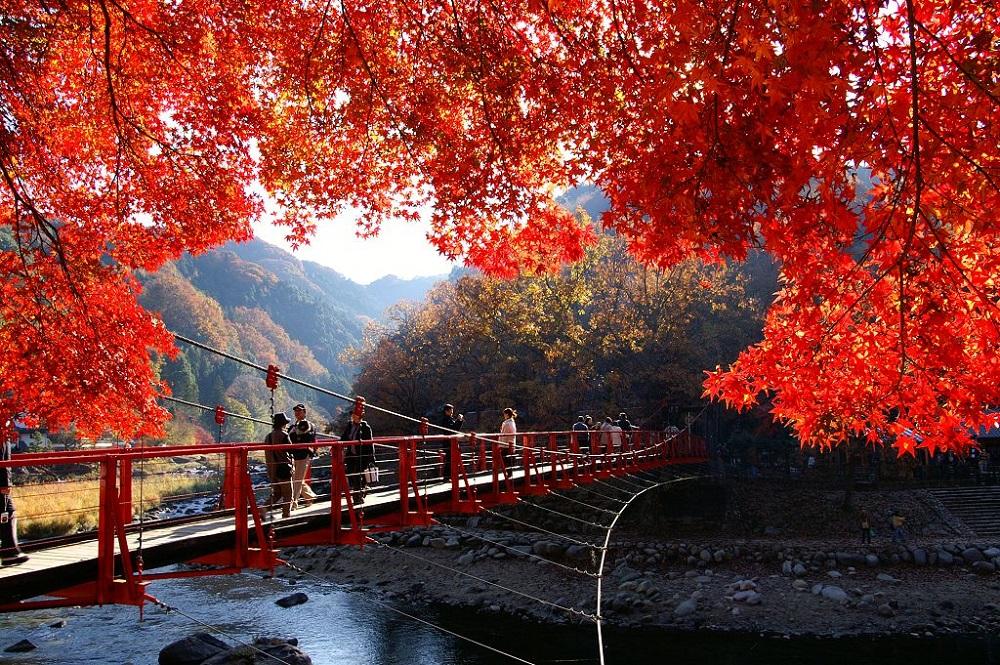 香嵐溪/日本/愛知縣/楓葉/楓紅/賞楓/吊橋