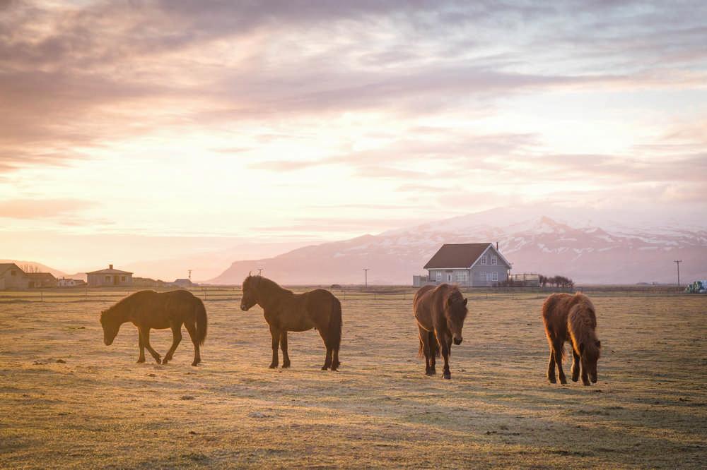Black Beach Riding Retreat/冰島/冰島馬/Airbnb
