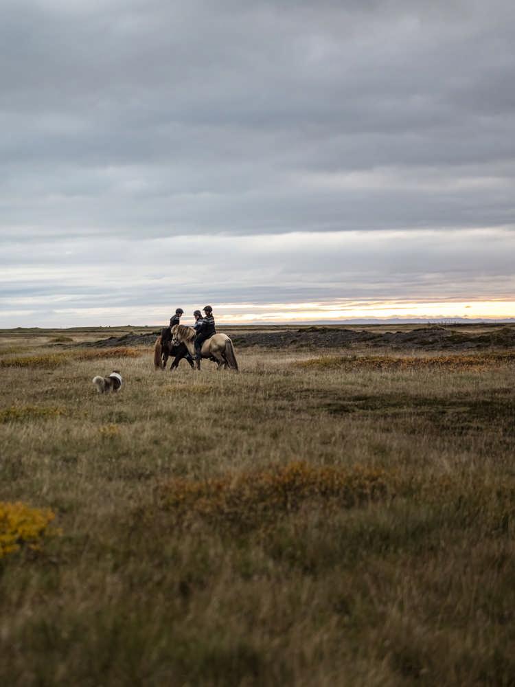 Black Beach Riding Retreat/冰島/冰島馬/Airbnb/河畔