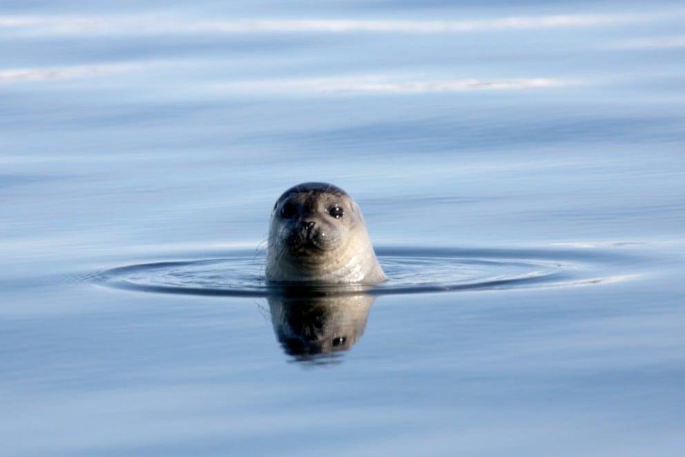 冰島自駕/Arctic Coast Way/歐洲最佳旅行地點/巨魔半島/海豹