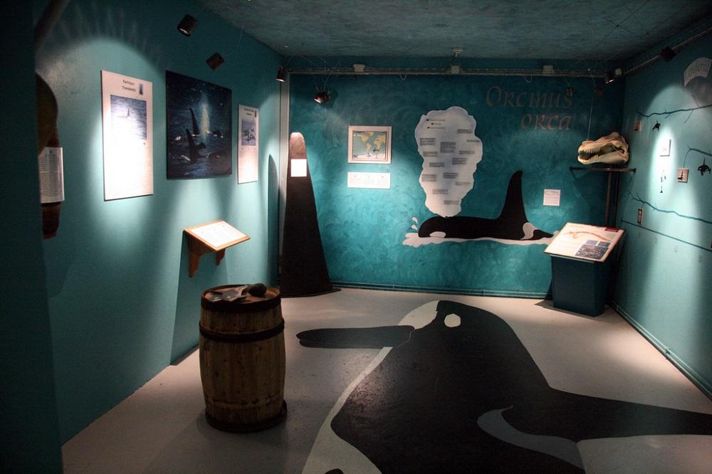 北極海岸公路/冰島自駕/歐洲最佳旅行地點/鯨魚博物館