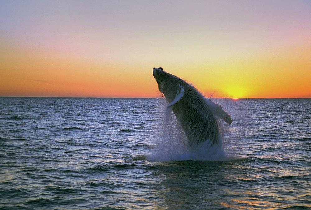 北極海岸公路/冰島自駕/歐洲最佳旅行地點/鯨魚/夕陽