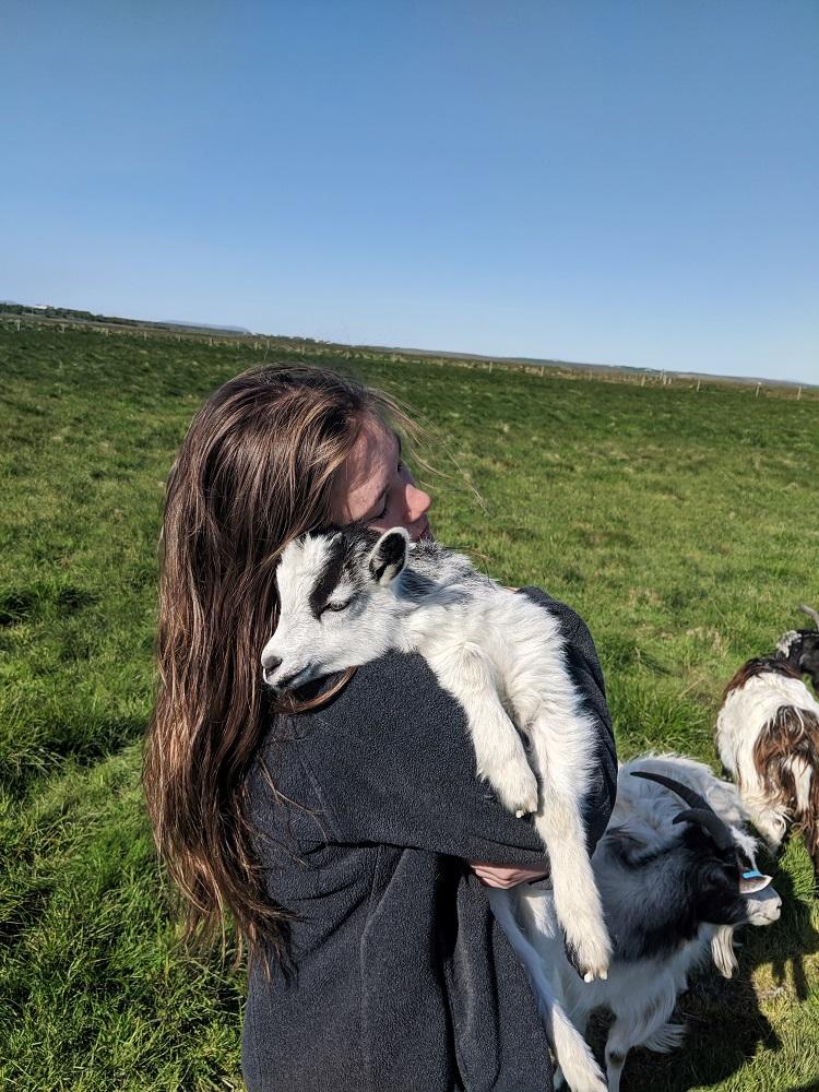 冰島山羊/牧場/冰島旅遊/瀕危物種/療癒互動/動物餵食