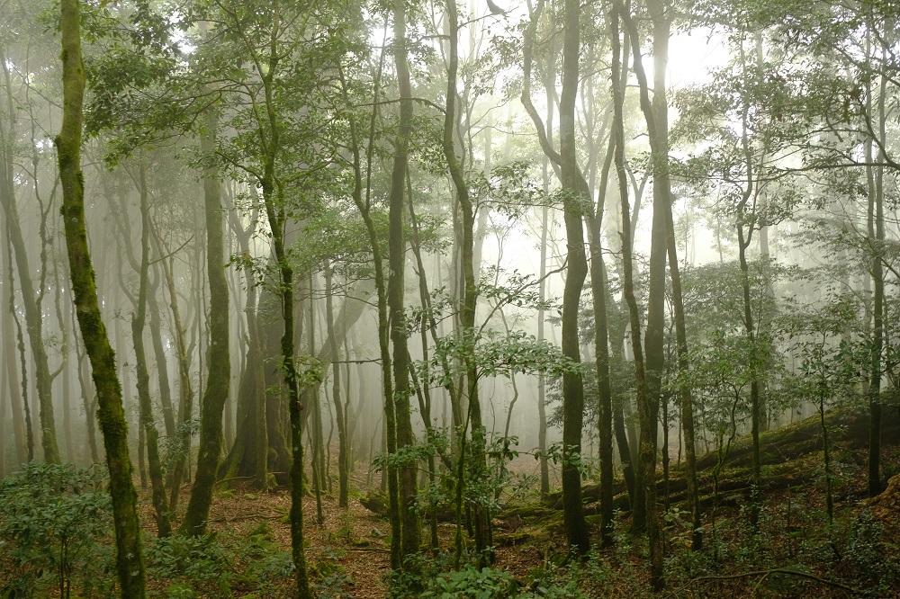 大雪山森林林場/台中/稍來山/森林/霧/空靈輕緲/仙境