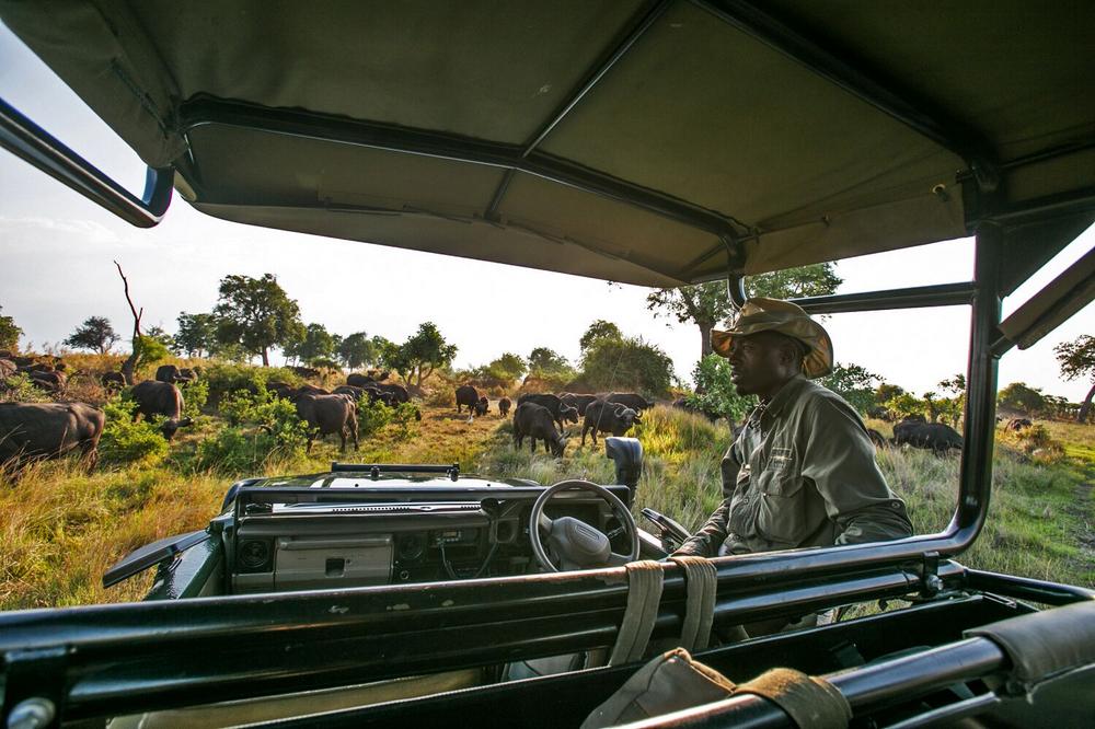 非洲獵遊/非洲/阿聯酋航空/ROAR AFRICA/野生動物/吉普車