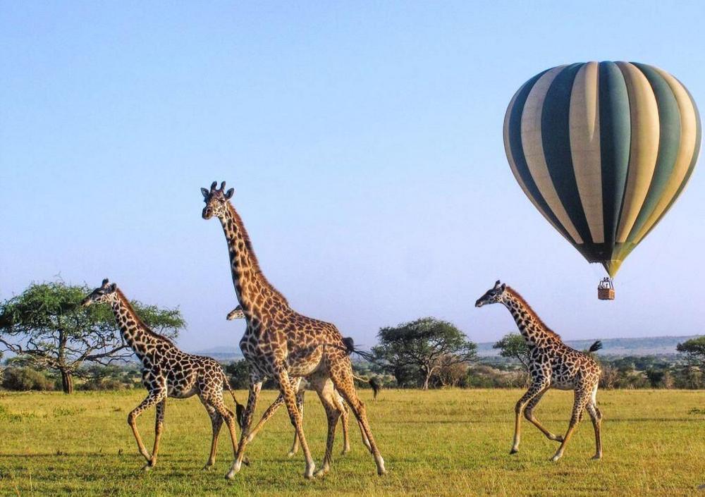 非洲獵遊/肯亞/阿聯酋航空/ROAR AFRICA/馬賽馬拉/熱氣球