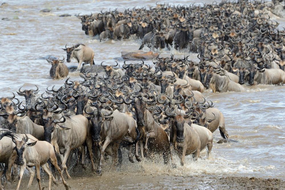 非洲獵遊/肯亞/阿聯酋航空/ROAR AFRICA/馬賽馬拉/動物大遷徙