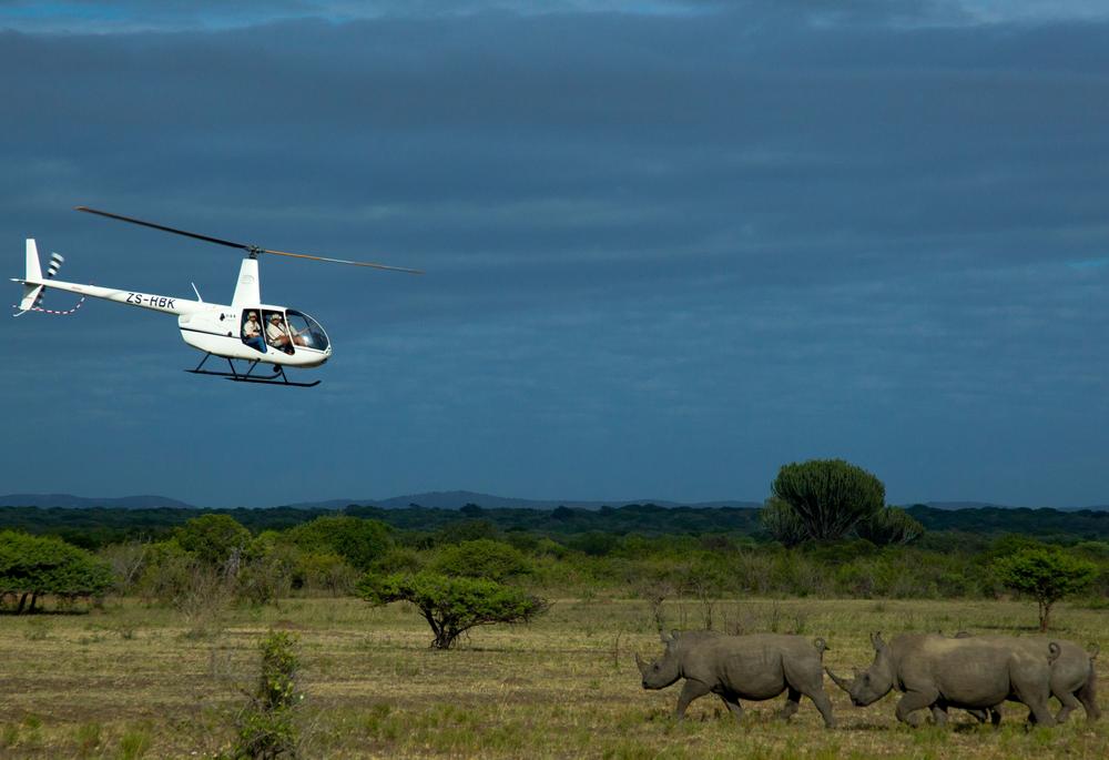 非洲獵遊/非洲/阿聯酋航空/ROAR AFRICA/直升機/犀牛