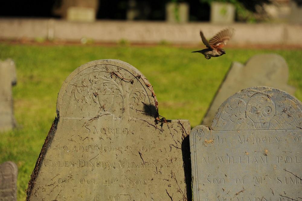 自由之路/波士頓/美國獨立/科柏丘墓園/鳥/墓碑