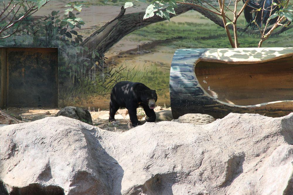 新竹動物園/馬來熊