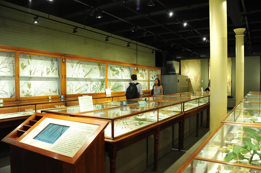 哈佛大學/波士頓/世界一流大學/哈佛一日遊/自然史博物館