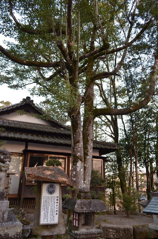 九州/熊本/人吉/青井阿蘇神社/招靈木